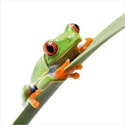 Eurographics Deco Glasbild Crazy Frog 30x30cm